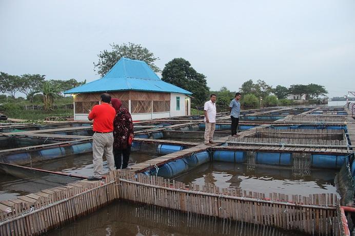 Uji multilokasi di Palembang