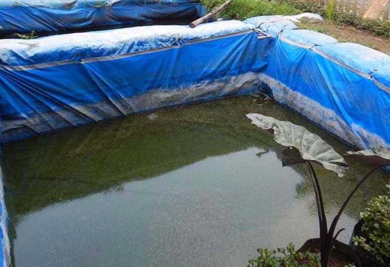 Pembenihan Ikan Lele Di Kolam Terpal Dinas Kelautan Dan Perikanan Provinsi Jawa Timur