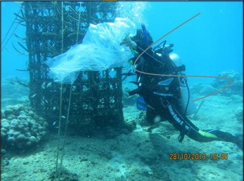 Penebaran ikan didasar laut (underwater restocking)