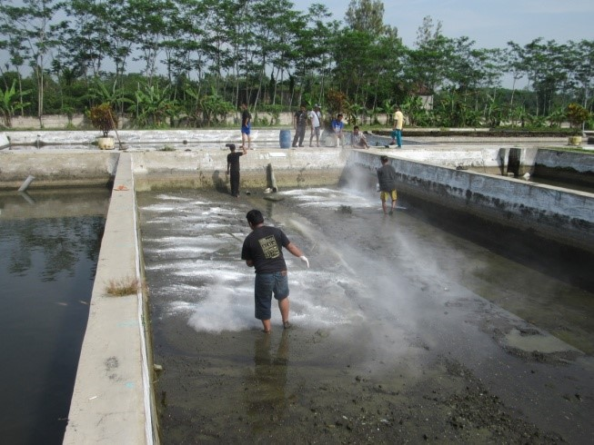 Pengapuran kolam