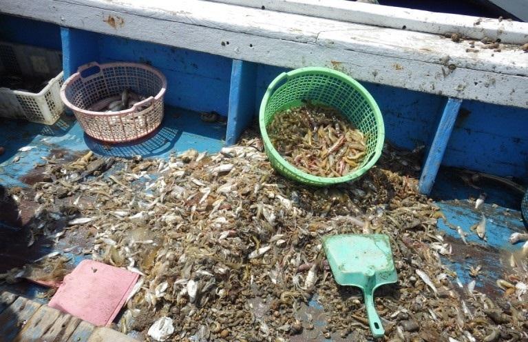 Ikan hasil tangkapan jaring Trawl dimana ikan bukan target turut ikut tertangkap dengan kondisi yang sudah mengalami kerusakan sehingga sangat membahayakan kelangsungan sumberdaya ikan