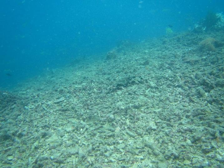 Kerusakan karang akibat penangkapan ikan menggunakan jaring Trawl