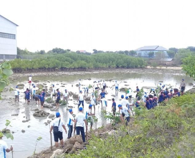 Peserta pesisir berseri sedang menanam mangrove di sekitar pesisir Tanggul Paciran, Kab. Lamongan