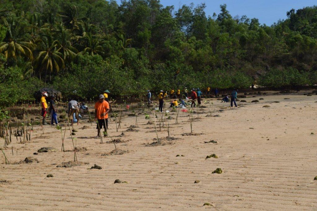 Penanaman mangrove oleh masyarakat sekitar pantai Siwil